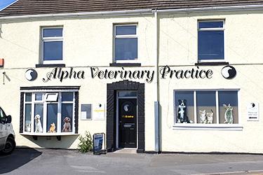 Alpha Veterinary Practice